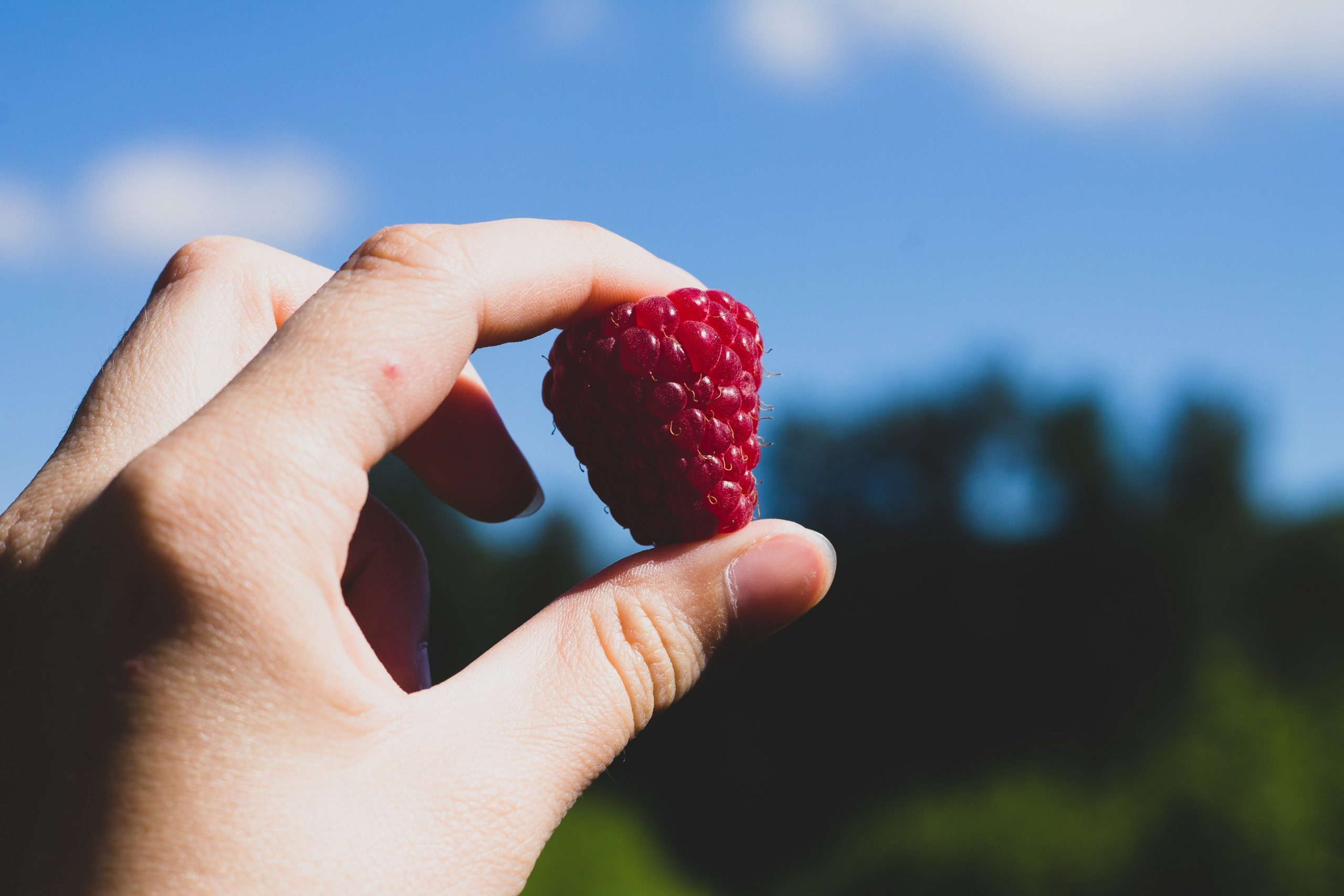hand holding a red raspberry against a blue sky