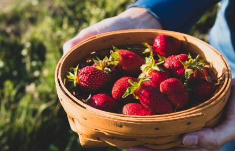 Stahlbush Island Farms Sustainable Frozen Vegetables ripe ripe strawberries in a basket
