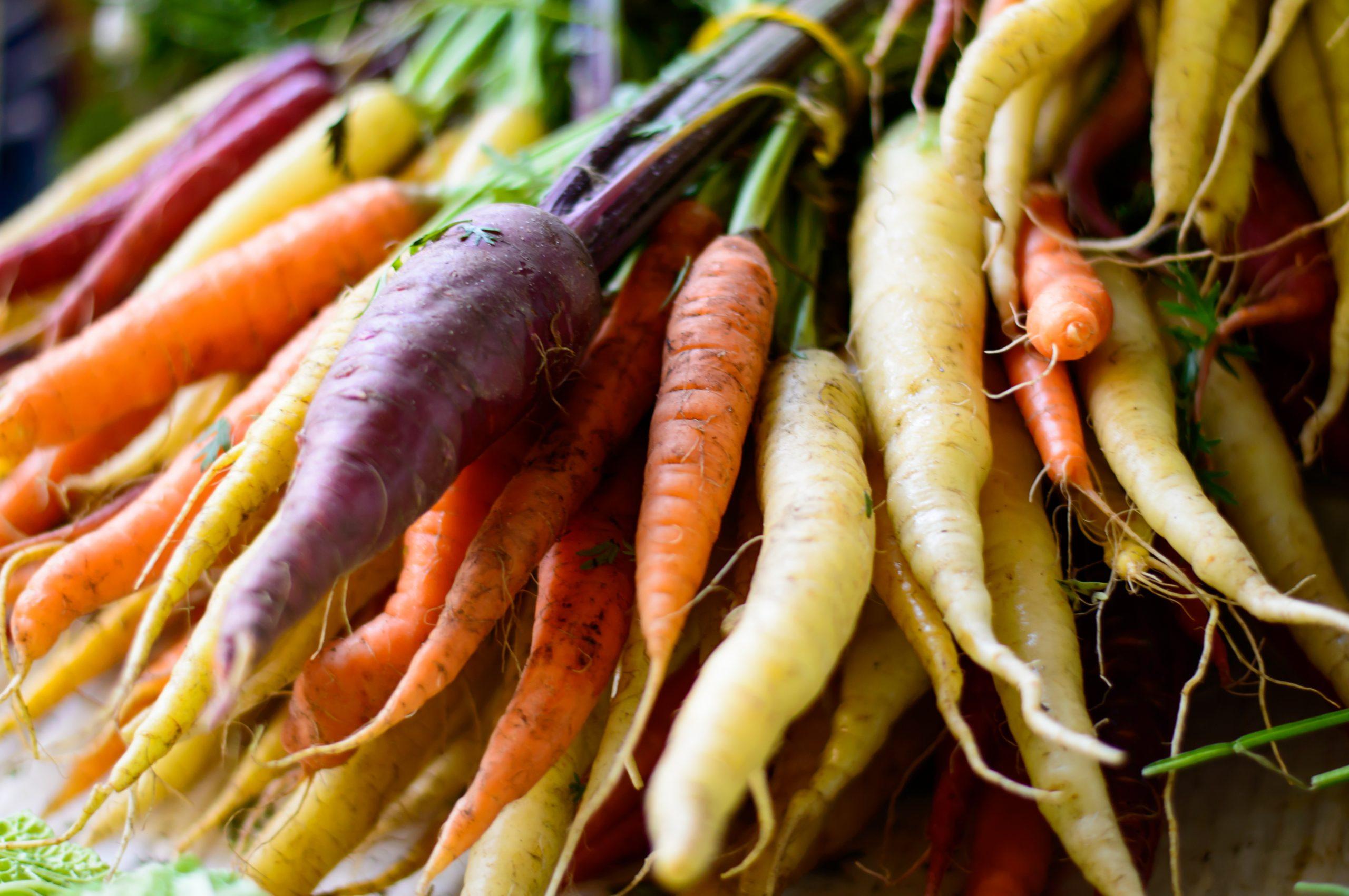 Stahlbush Island Farms Tri Colored Carrots in Field